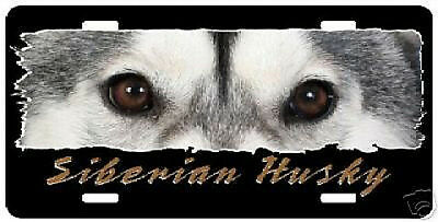 "Siberian Husky   "" The Eyes Have It ""  License Plate"