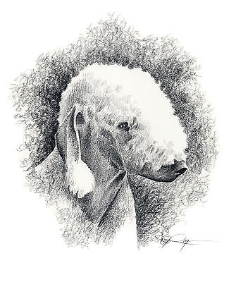 BEDLINGTON TERRIER Pencil Dog 8 x 10 ART Print Signed DJR