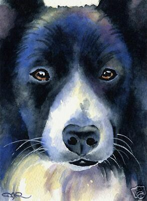 BORDER COLLIE Dog Watercolor 8 x 10 ART Print Signed DJR