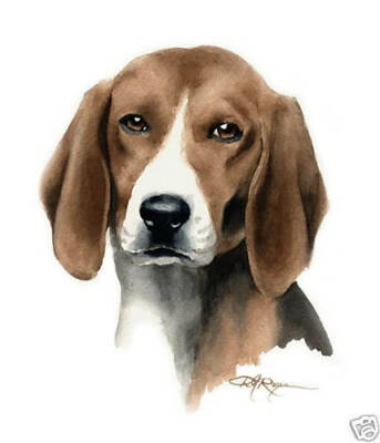 ENGLISH FOXHOUND Art Print Dog Painting 8 x 10 Signed by Watercolor Artist DJR