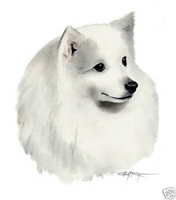 JAPANESE SPITZ Art Print Watercolor Dog 8 x 10 Signed by Artist DJR w/COA