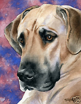 GREAT DANE ART Print Dog Watercolor Painting 8 x 10 Signed by Artist DJR w/COA