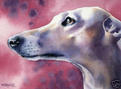 GREYHOUND ART Print Watercolor Painting Dog 8 x 10 Signed by Artist DJR w/COA
