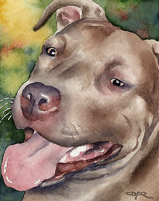 PIT BULL Pitbull Dog Painting 8 x 10 ART Print Signed by Artist DJR