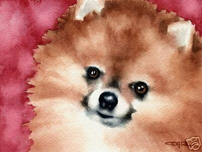 POMERANIAN Dog Watercolor Painting 8 x 10 ART Print Signed by Artist DJR