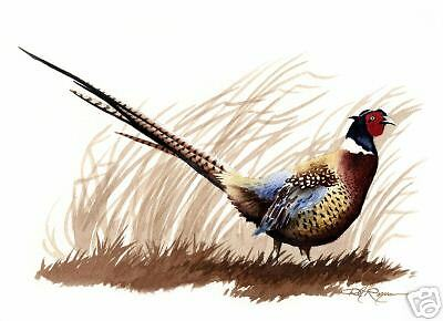 RING NECK PHEASANT Watercolor 8 x 10 ART Print Signed by Artist DJR