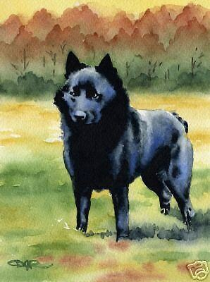SCHIPPERKE Dog Watercolor Painting 8 x 10 ART Print Signed by Artist DJR