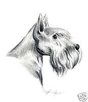 SCOTTISH  TERRIER Drawing 8 x 10 ART Print Signed by Artist DJR