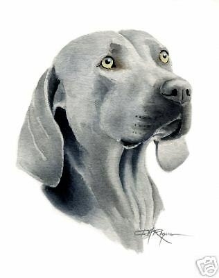 WEIMARANER ART Print DOG Watercolor Painting 8 x 10 Signed by Artist DJR w/COA
