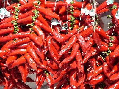 20 graines de PIMENT GORRIA (piment basque) - SEB-0066