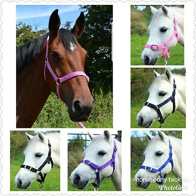 Headcollar And Lead Rope Set Shetland Pony ,cob Or Full Size 8 Colours