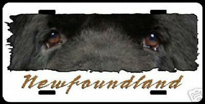 """Newfoundland  on white """" The Eyes Have It """"  Lic  Plate"""