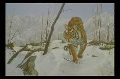 319067 On The Prowl Siberian Tiger A4 Photo Print