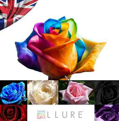 50 x ROSE SEEDS MULTI-COLOURED MIXED RAINBOW ROSE/BUD STEMLING, METER SHOWER