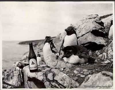 British Navy 1930S Hms Exeter Drunken Penguins A4 Photo Print