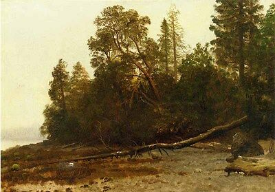 """Art huge Oil painting nice landscape The Fallen Tree in forest canvas 24""""x36"""""""