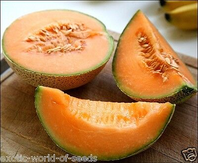"""Russian Sweet Melon Seeds """"carotel"""" - Hardy Weather Variety F1 Hybrid"""