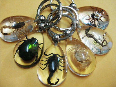6pcs green beetle&spider&scorpion&crab Fashion insect mix magic key-chain