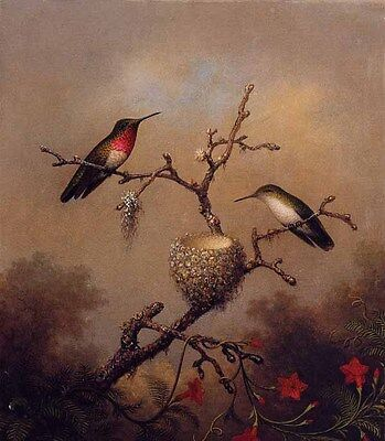 Art Oil painting Martin Johnson Heade - nice birds Ruby-Throated Hummingbird
