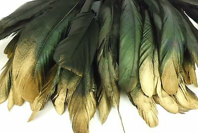 """50+ Black Gold Tip Iridescent Rooster Coque Tail Feather 6""""l-8""""l"""