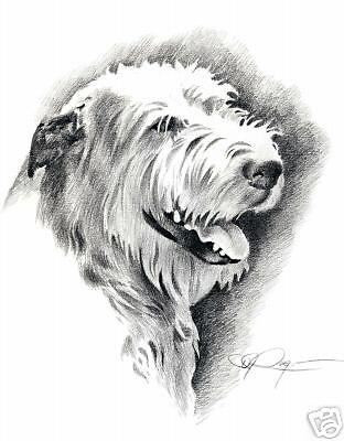 IRISH WOLFHOUND Pencil Drawing 8 x 10 ART DOG Print Signed DJR
