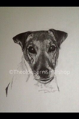 Jack Russell Dog Print Pencil Graphite Drawing/sketch