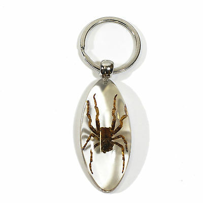 Real Spider (Araneus ventricosus) Key Chain Oval Shape Clear (SK804)