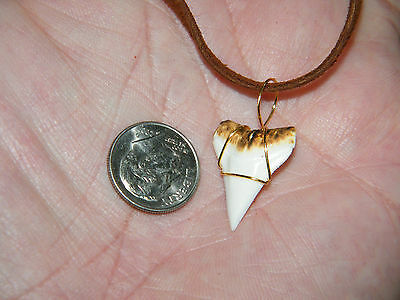 """SHARK TOOTH Necklace Brown Leather Real Teeth Choker 24"""" Brown Leather Cord NEW!"""