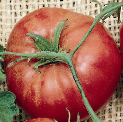 "Trip-L-Crop Tomato (Italian Tree Tomato) *Heirloom* (50 Seed's)  ""FREE SHIPPING"""