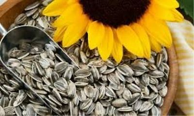 Fresh Roasted Salted Sunflower Seeds 1Kg - Buy From Distributor