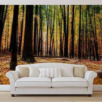 WALL MURAL PHOTO WALLPAPER PICTURE (1220VE) Forest Woods Landscape