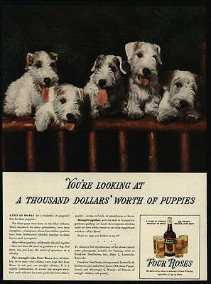 1938 Cute TERRIER Dogs - Puppies - FOUR ROSES Whiskey -  VINTAGE AD