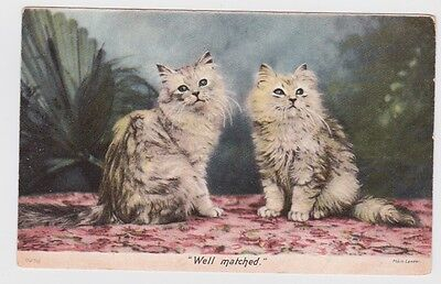 vintage 1904 Well Matched Longhair  Pair Cats postcard