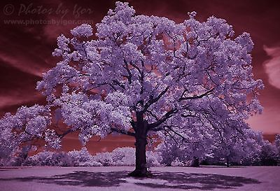 Photograph Infrared Photography Fine-Art Print Blazing Aura