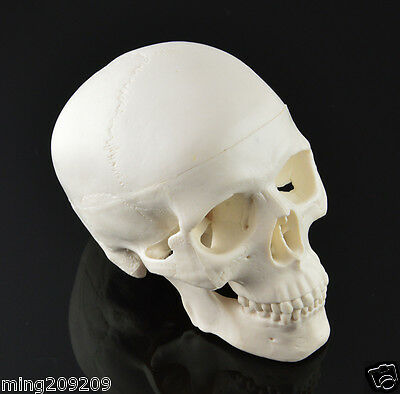 New Skull Unique White Hand made  Human Resin Skull Medical Replica Cranium AAAA