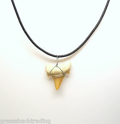 Fossil Shark Tooth Surfer Leather Necklace 18 in. Sharks Teeth 7204