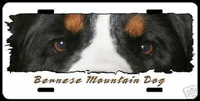 """Bernese Mountain Dog  """" Eyes Have It """" License  Plate"""