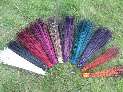 Wholesale beautiful pheasant tail feathers 20-22 inches/50-55 cm Free shipping