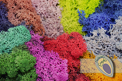 Dried Reindeer Moss - multiple colours and pack sizes