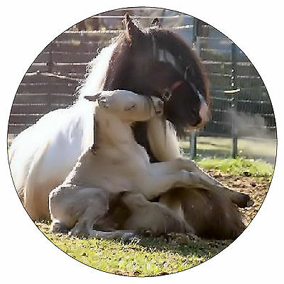 Horse And Foal - Fun Novelty Fridge Magnet - Brand New - Gift - Xmas