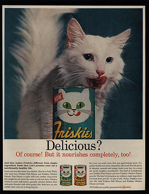 1961 Cute TURKISH ANGORA White Kitten - Cat - FRISKIES Cat Food VINTAGE AD