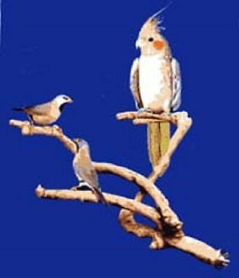 Parrot Bird Perch Natural Wood Multi Branch Extra Small
