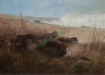 Reproduction Print on A4 - A. Thorburn - A moonlight night..., grey partridges