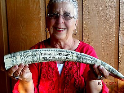 "Scrimshaw Replica Walrus Tusk  the""BARK VERONICA"" 18 inches long around curve"