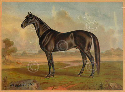 America's Renowned Stallions II Vintage Horse Print Poster 12x16.25