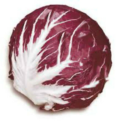Radicchio Palla Rossa 100 vegetable garden seeds NOT FOR WA OR TAS