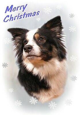 Border Collie Dog A6 Christmas Card Design XBORCOL-10 by paws2print