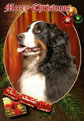 Bernese Mountain Dog A6 Christmas Card Design XBERNESE-8 by paws2print