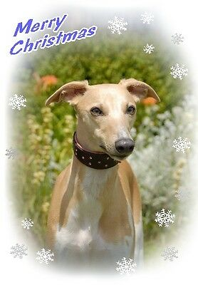 Whippet Dog A6 Christmas Card Design XWHIP-12 by paws2print