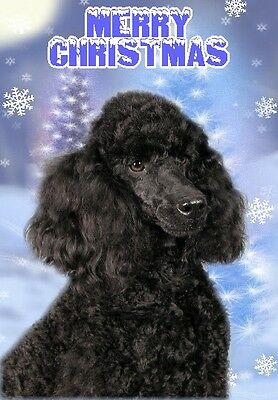 Poodle Dog A6 Christmas Card Design XPOODLE-23 by paws2print